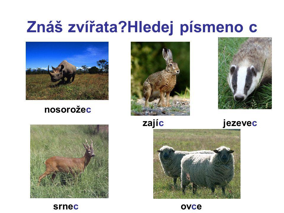 Znáš zvířata Hledej písmeno c