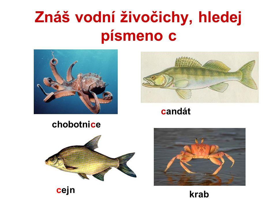 Znáš vodní živočichy, hledej písmeno c