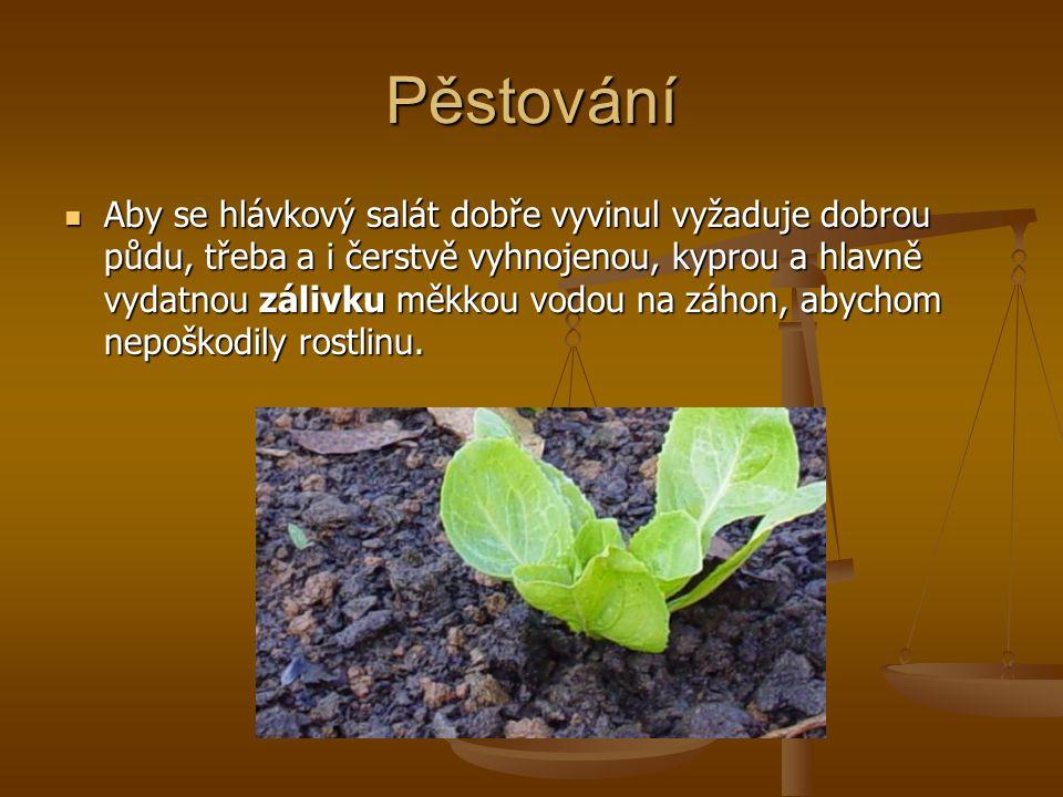 Pěstování
