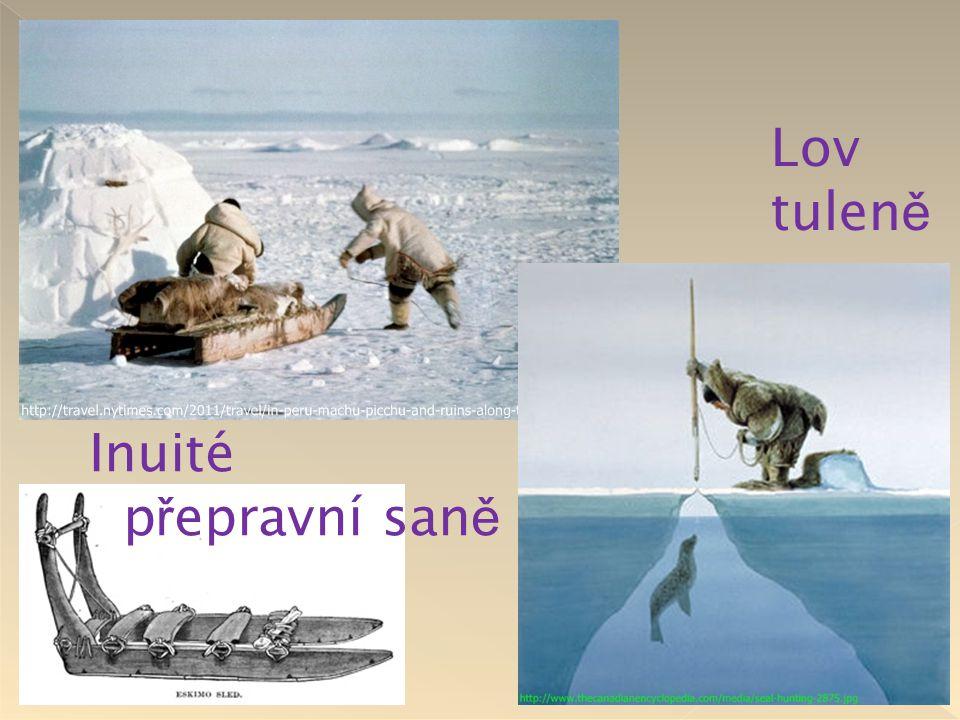 Lov tuleně Inuité přepravní saně