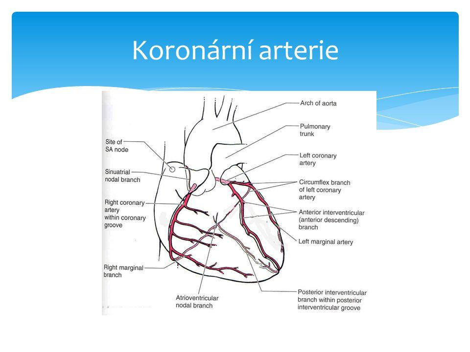 Koronární arterie