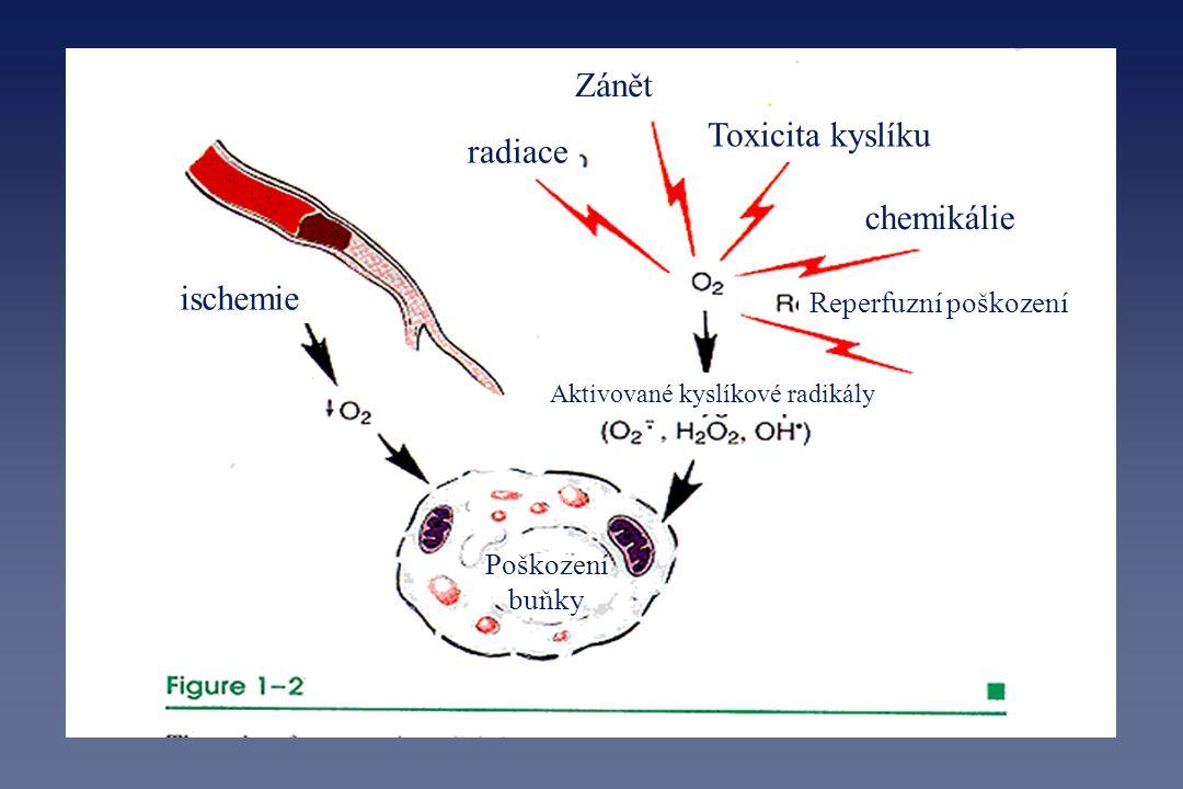 Zánět Toxicita kyslíku radiace chemikálie ischemie