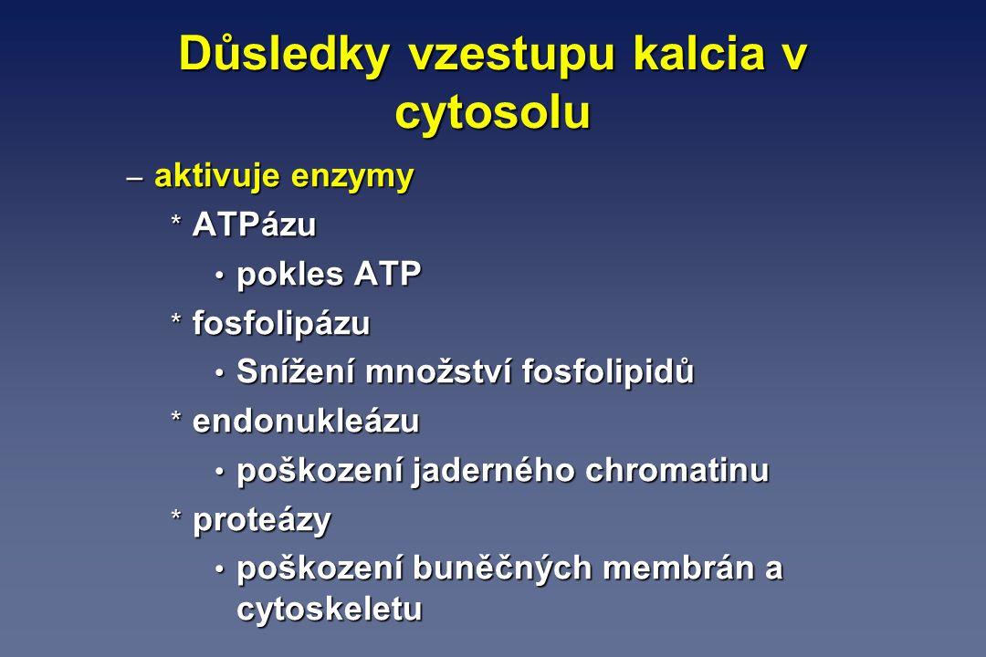 Důsledky vzestupu kalcia v cytosolu