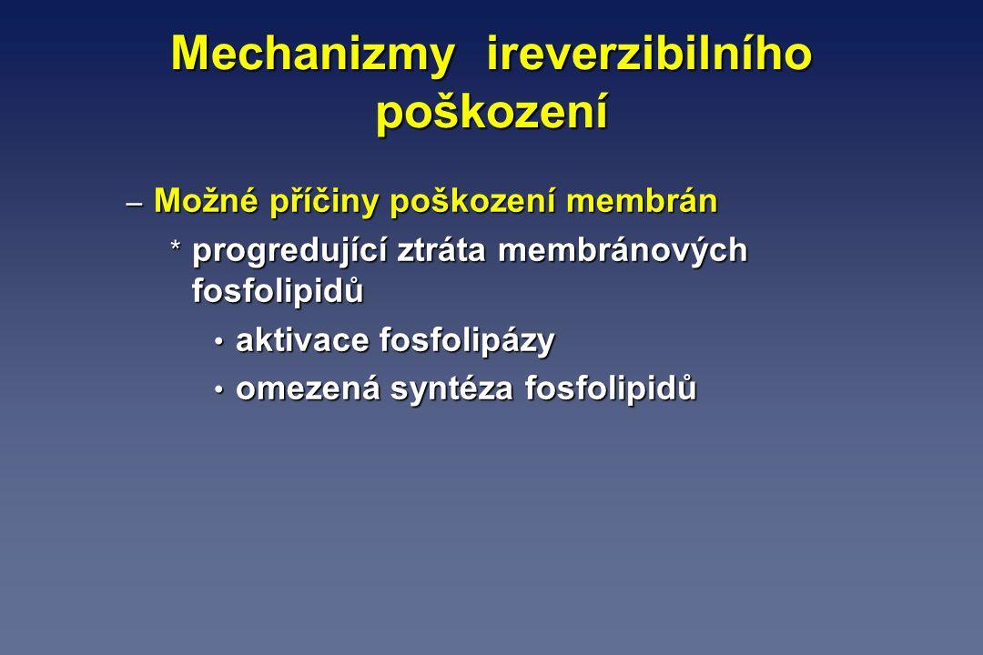 Mechanizmy ireverzibilního poškození