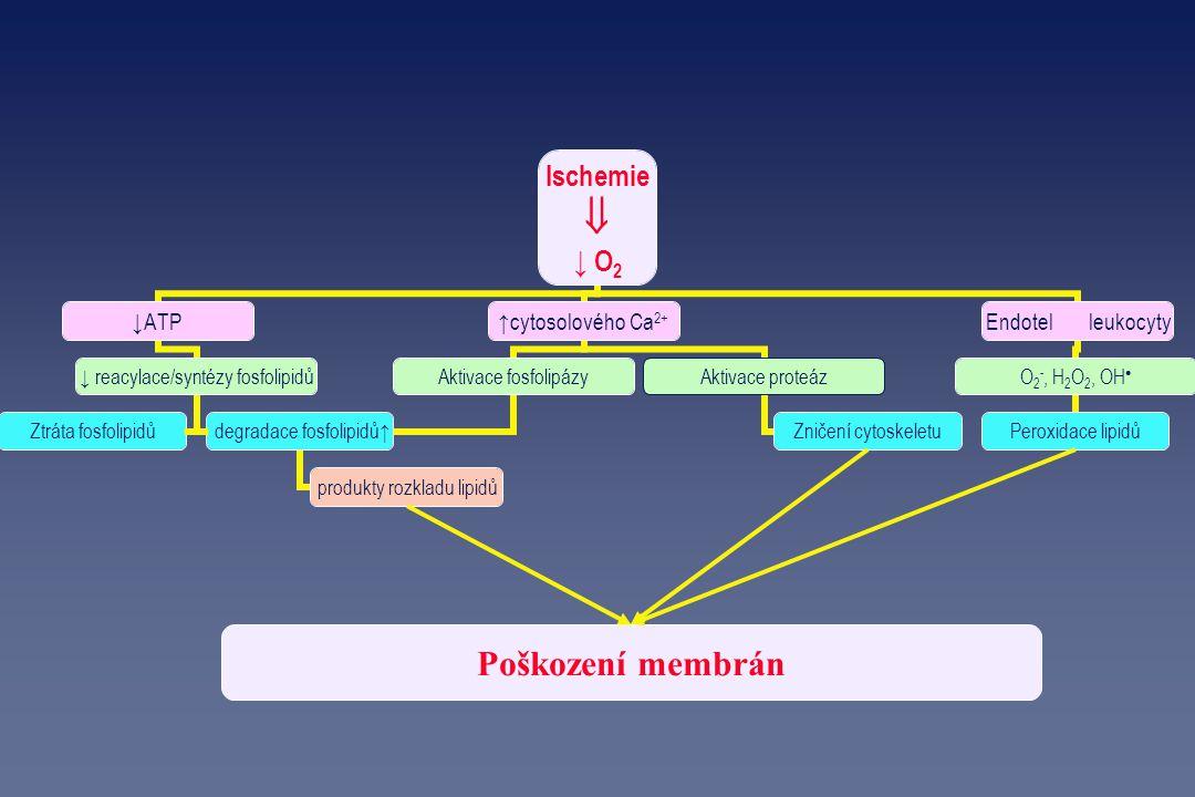 Poškození membrán