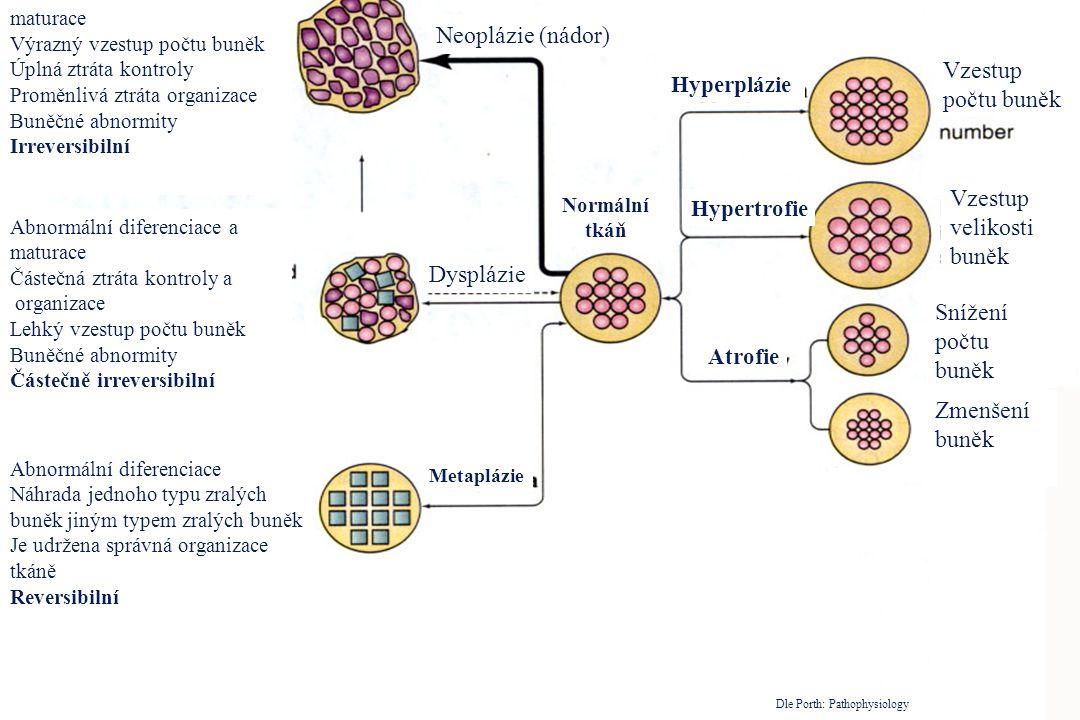Vzestup velikosti buněk