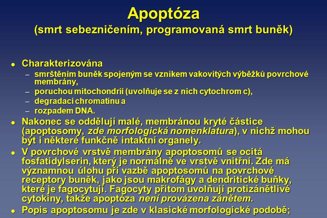 Apoptóza (smrt sebezničením, programovaná smrt buněk)