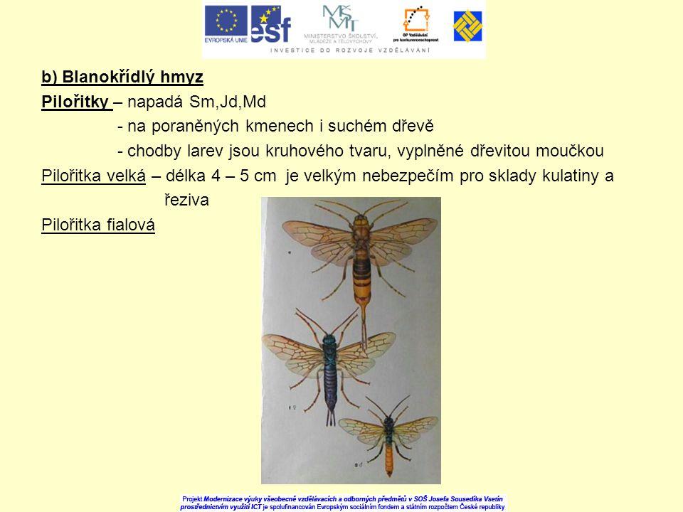 b) Blanokřídlý hmyz Pilořitky – napadá Sm,Jd,Md. - na poraněných kmenech i suchém dřevě.