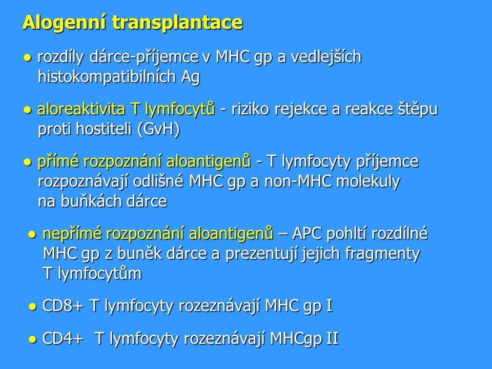 Alogenní transplantace ● rozdíly dárce-příjemce v MHC gp a vedlejších histokompatibilních Ag ● aloreaktivita T lymfocytů - riziko rejekce a reakce štěpu proti hostiteli (GvH) ● přímé rozpoznání aloantigenů - T lymfocyty příjemce rozpoznávají odlišné MHC gp a non-MHC molekuly na buňkách dárce ● nepřímé rozpoznání aloantigenů – APC pohltí rozdílné MHC gp z buněk dárce a prezentují jejich fragmenty T lymfocytům ● CD8+ T lymfocyty rozeznávají MHC gp I ● CD4+ T lymfocyty rozeznávají MHCgp II