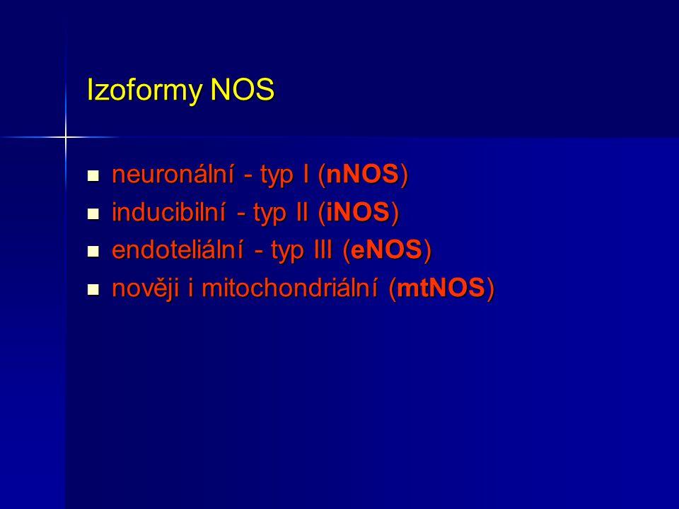 Izoformy NOS neuronální - typ I (nNOS) inducibilní - typ II (iNOS)