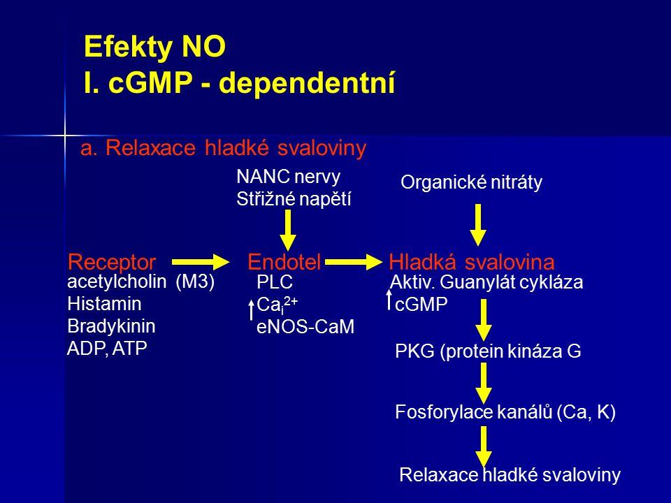 Efekty NO I. cGMP - dependentní Relaxace hladké svaloviny Receptor