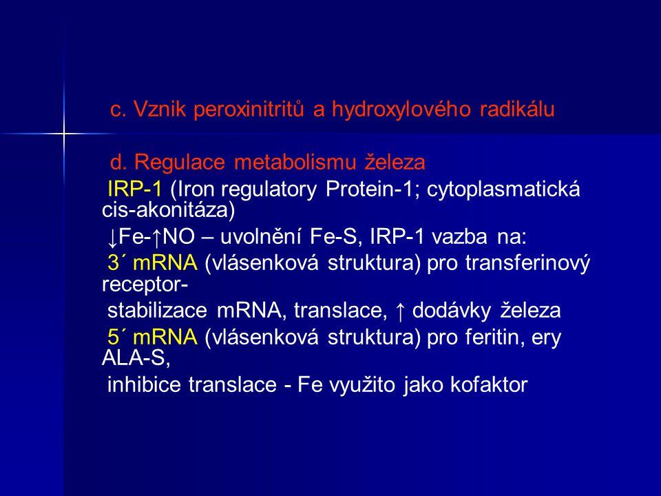 c. Vznik peroxinitritů a hydroxylového radikálu