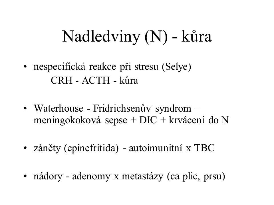 Nadledviny (N) - kůra nespecifická reakce při stresu (Selye)