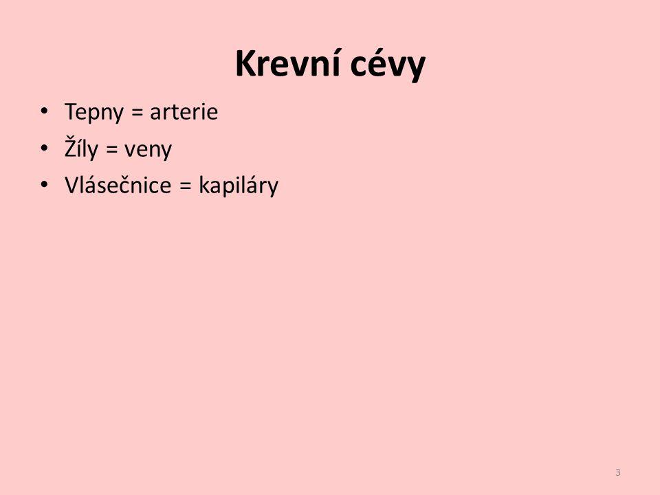 Krevní cévy Tepny = arterie Žíly = veny Vlásečnice = kapiláry