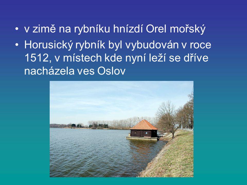 v zimě na rybníku hnízdí Orel mořský