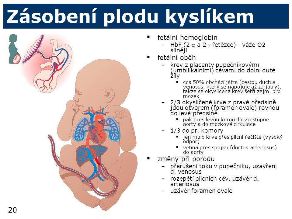 Zásobení plodu kyslíkem