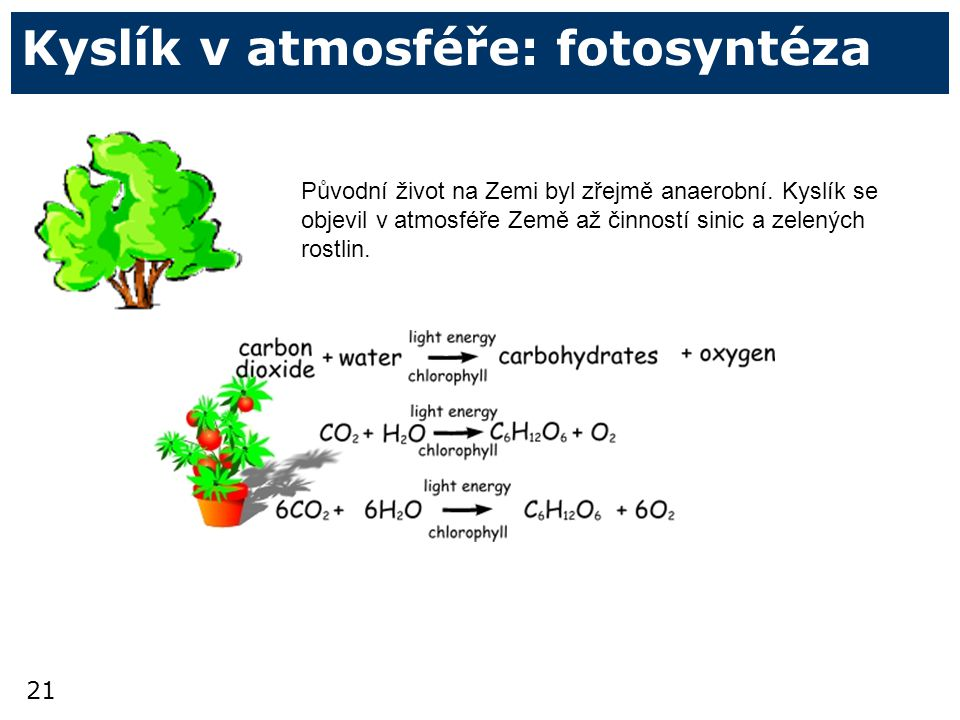 Kyslík v atmosféře: fotosyntéza