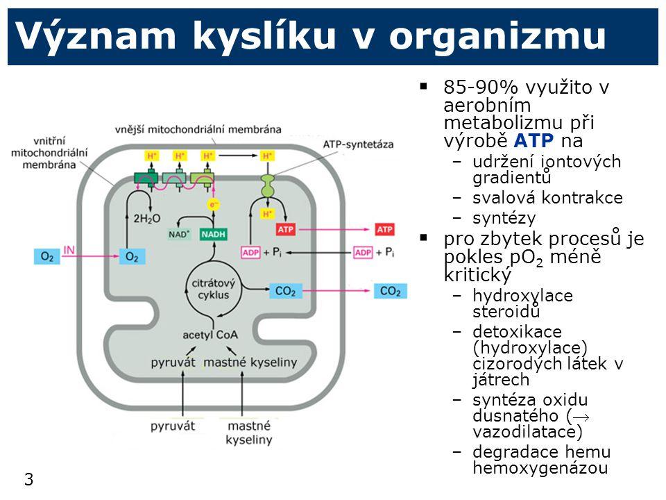 Význam kyslíku v organizmu
