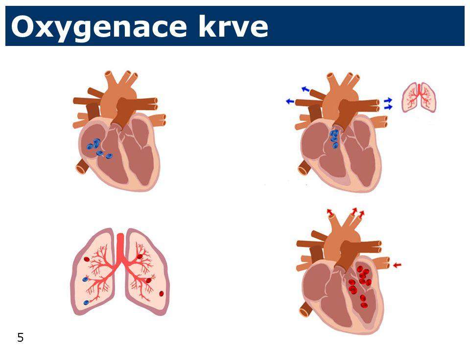 Oxygenace krve