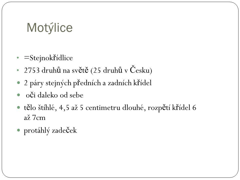 Motýlice =Stejnokřídlice 2753 druhů na světě (25 druhů v Česku)