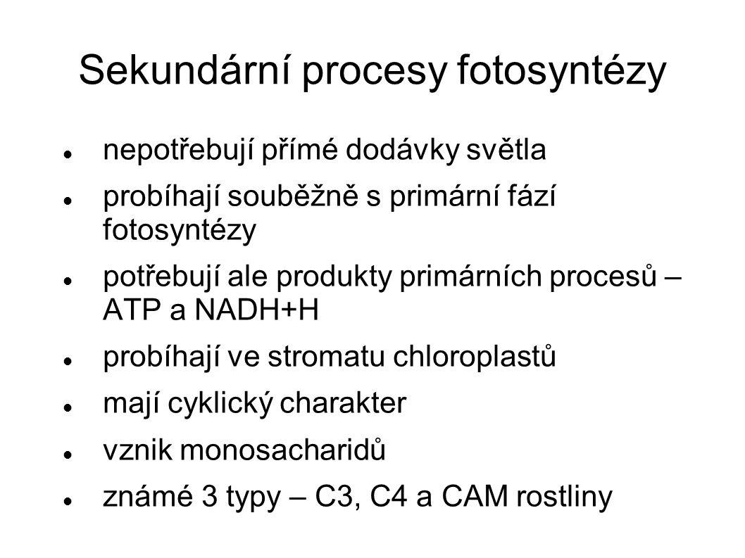 Sekundární procesy fotosyntézy