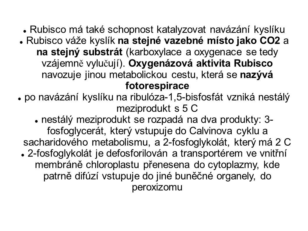 Rubisco má také schopnost katalyzovat navázání kyslíku