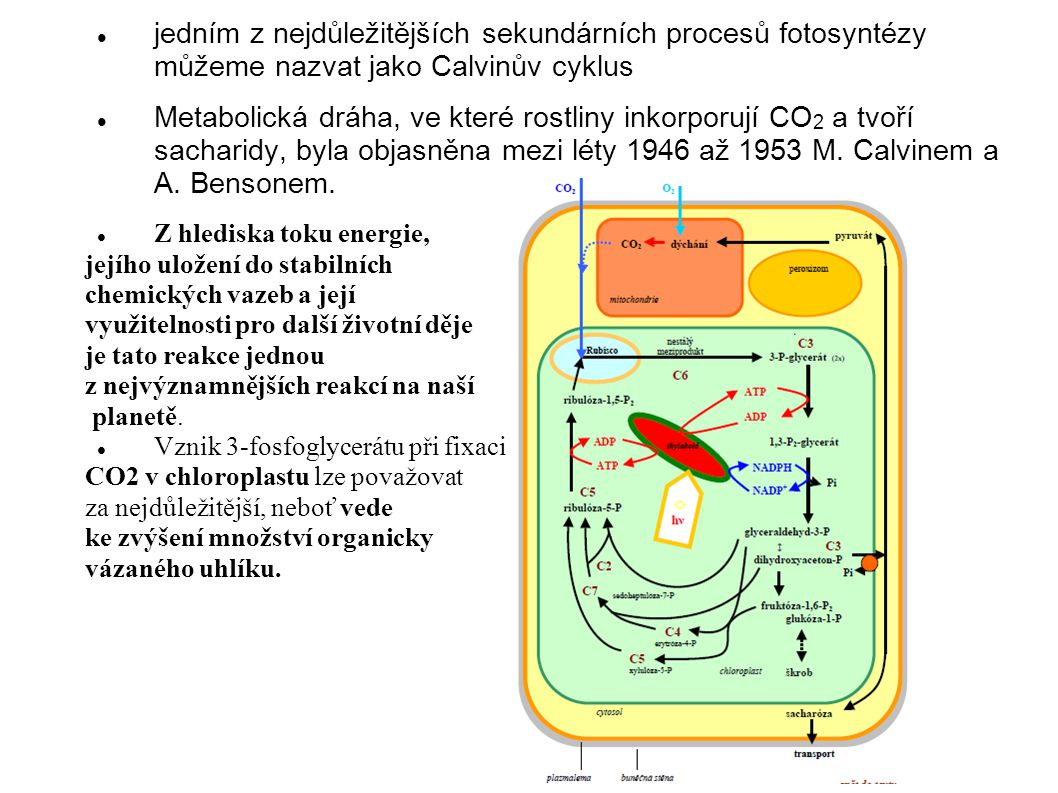 jedním z nejdůležitějších sekundárních procesů fotosyntézy můžeme nazvat jako Calvinův cyklus