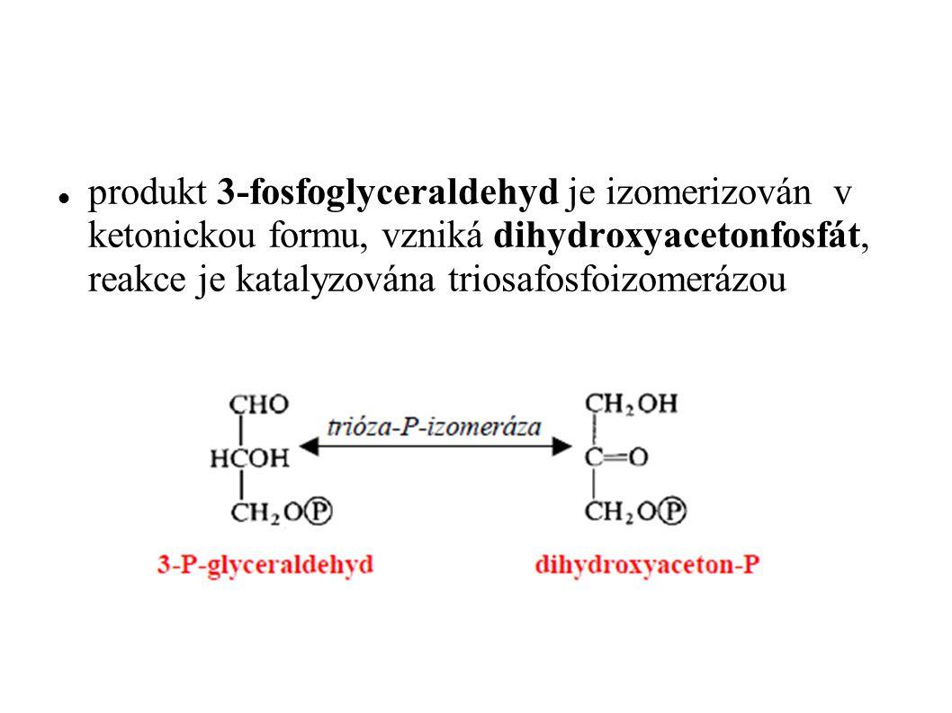 produkt 3-fosfoglyceraldehyd je izomerizován v ketonickou formu, vzniká dihydroxyacetonfosfát, reakce je katalyzována triosafosfoizomerázou