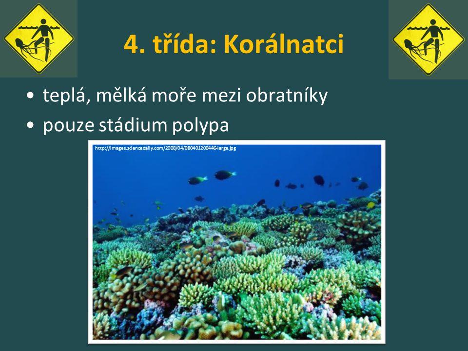 4. třída: Korálnatci teplá, mělká moře mezi obratníky