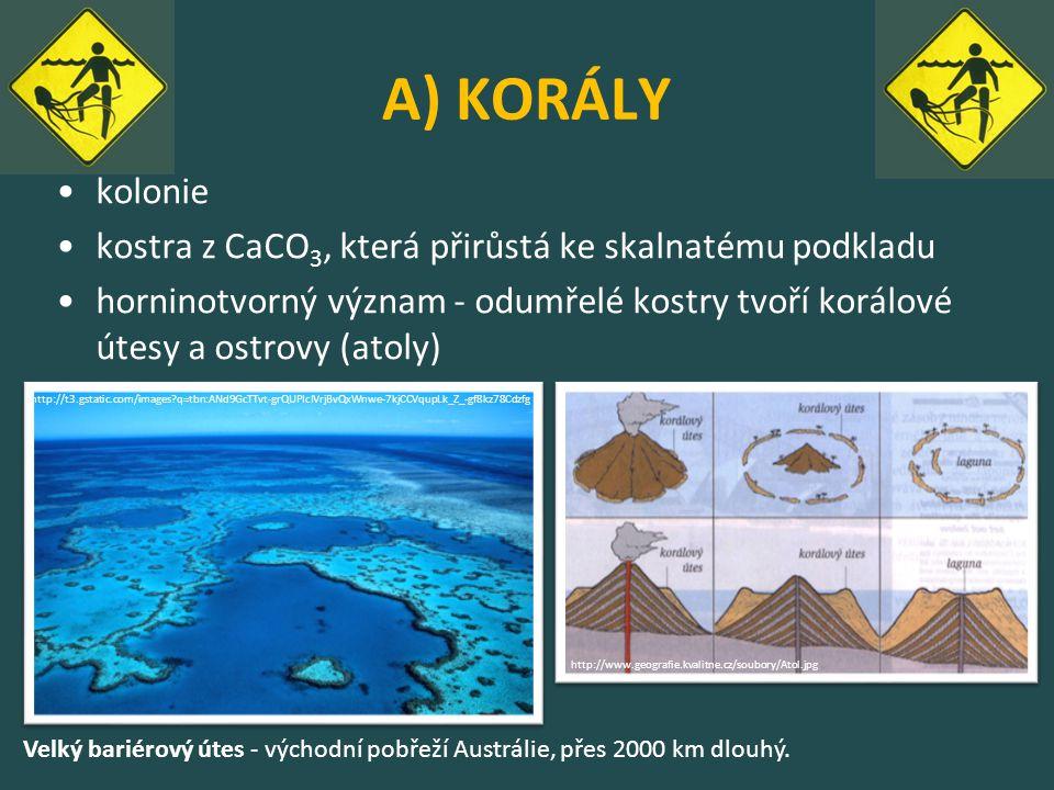 A) KORÁLY kolonie. kostra z CaCO3, která přirůstá ke skalnatému podkladu.
