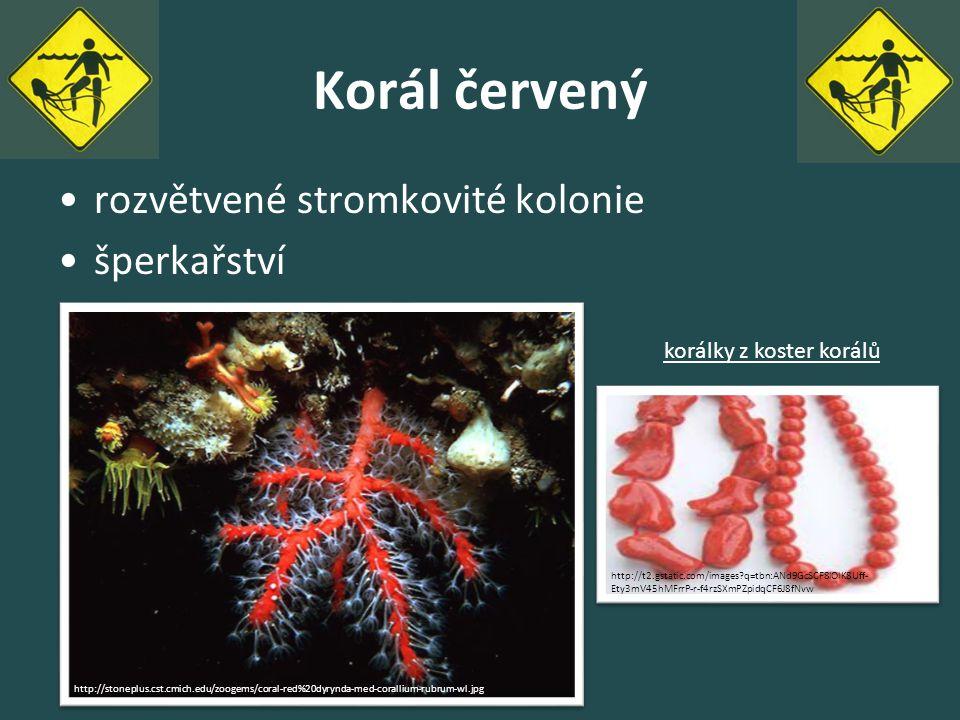 Korál červený rozvětvené stromkovité kolonie šperkařství