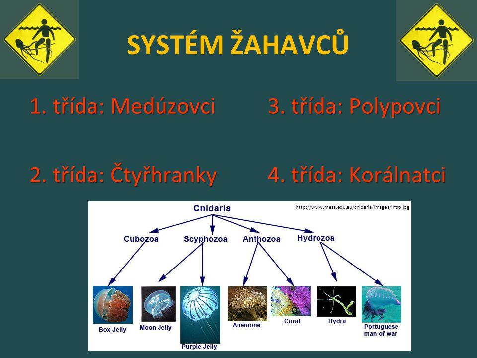 SYSTÉM ŽAHAVCŮ 1. třída: Medúzovci 3. třída: Polypovci 2.