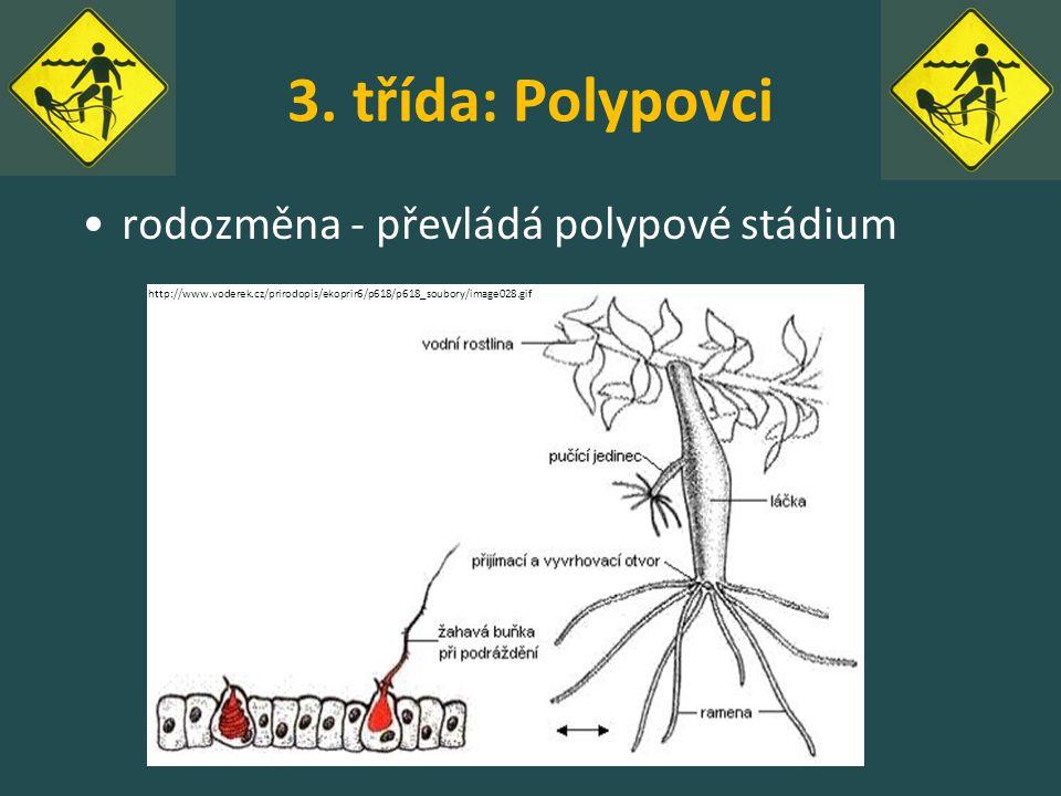 3. třída: Polypovci rodozměna - převládá polypové stádium