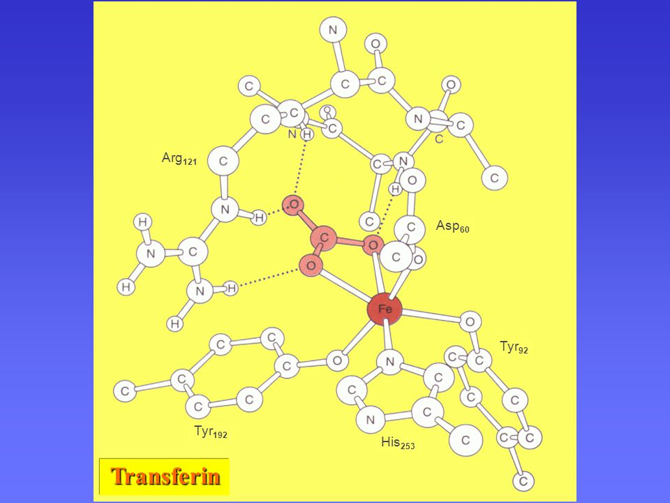 Struktura transferinu