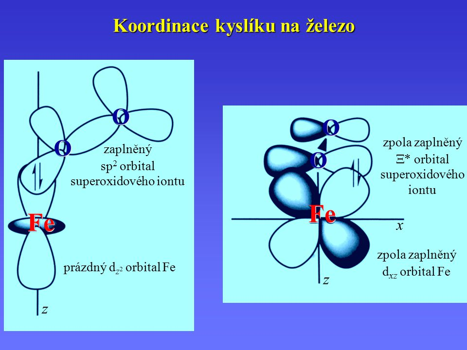 Koordinace kyslíku na železo