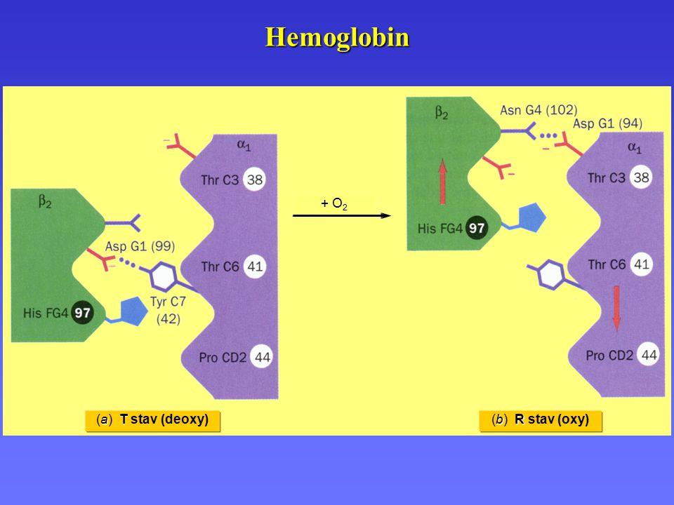 Hemoglobin + O2 (b) R stav (oxy) (a) T stav (deoxy)