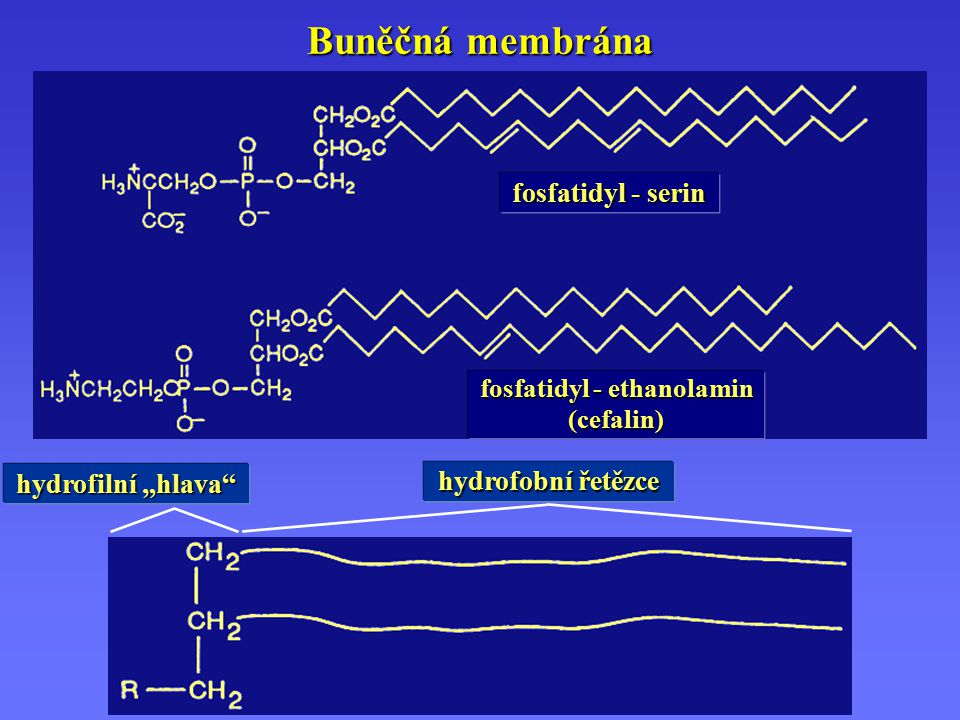 fosfatidyl - ethanolamin
