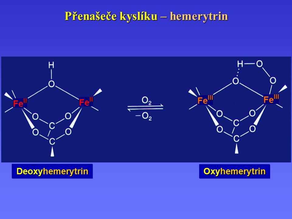Přenašeče kyslíku – hemerytrin