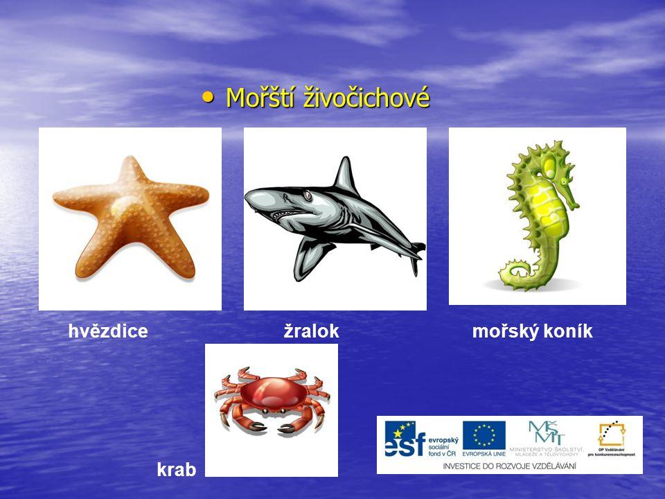 Mořští živočichové hvězdice žralok mořský koník krab