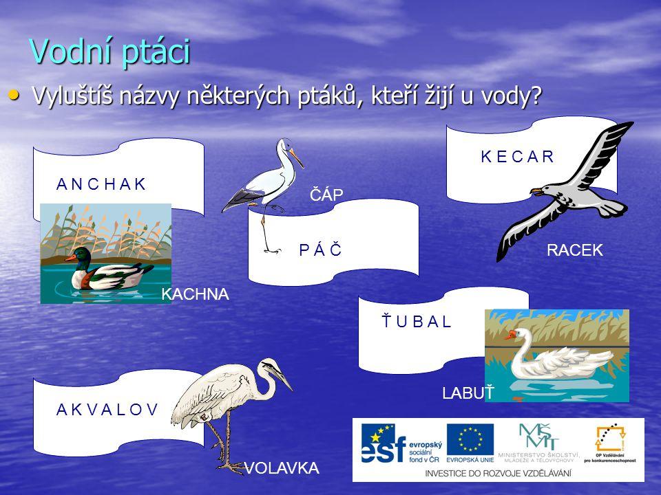 Vodní ptáci Vyluštíš názvy některých ptáků, kteří žijí u vody