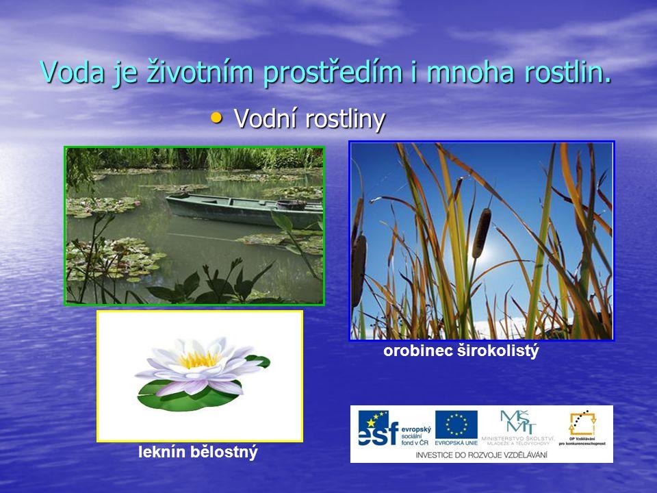 Voda je životním prostředím i mnoha rostlin.