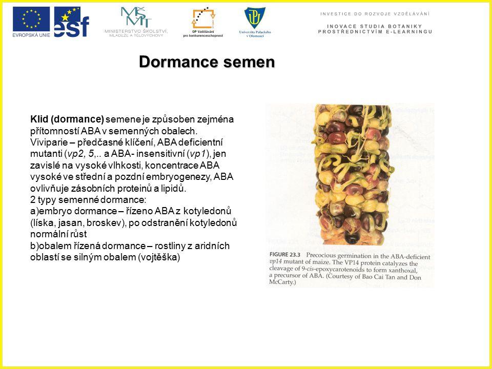 Dormance semen Klid (dormance) semene je způsoben zejména přítomností ABA v semenných obalech.