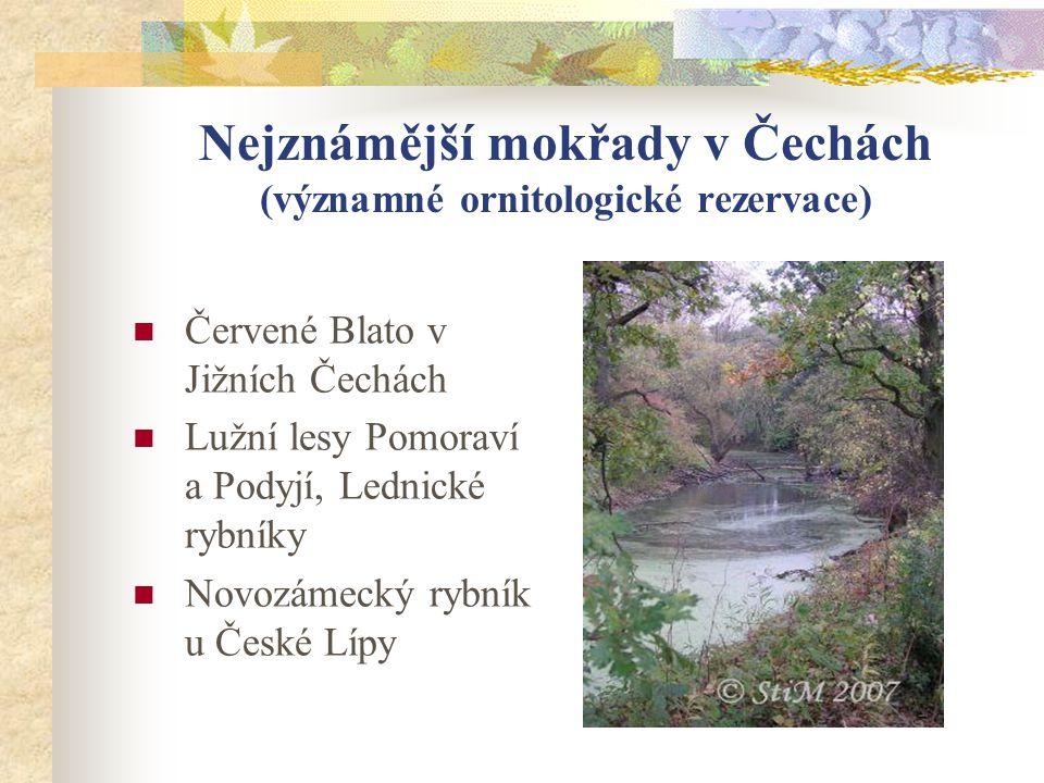 Nejznámější mokřady v Čechách (významné ornitologické rezervace)