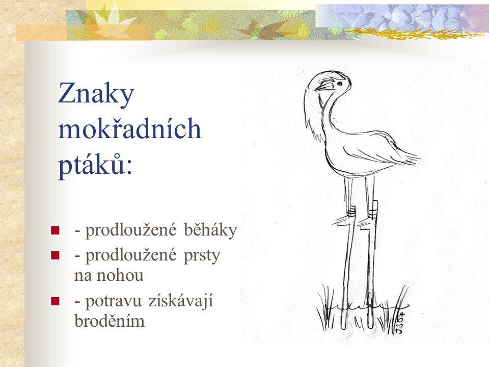 Znaky mokřadních ptáků: