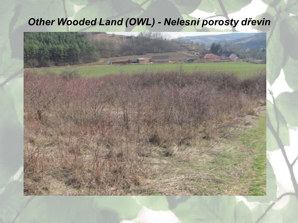 Other Wooded Land (OWL) - Nelesní porosty dřevin