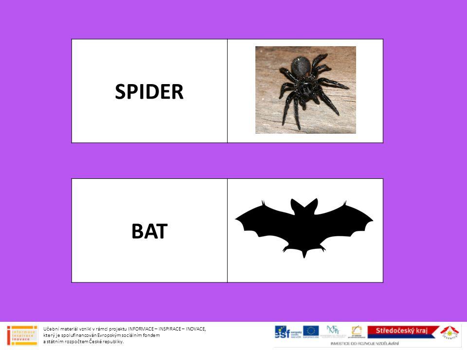 SPIDER BAT.