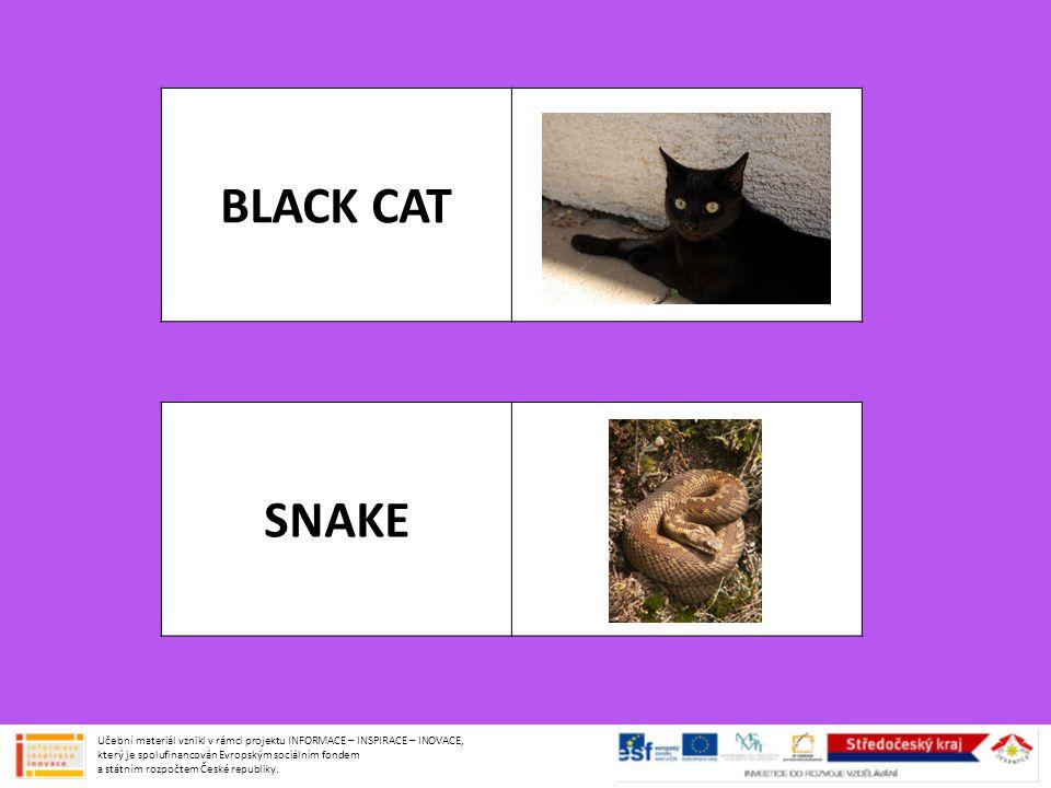 BLACK CAT SNAKE.