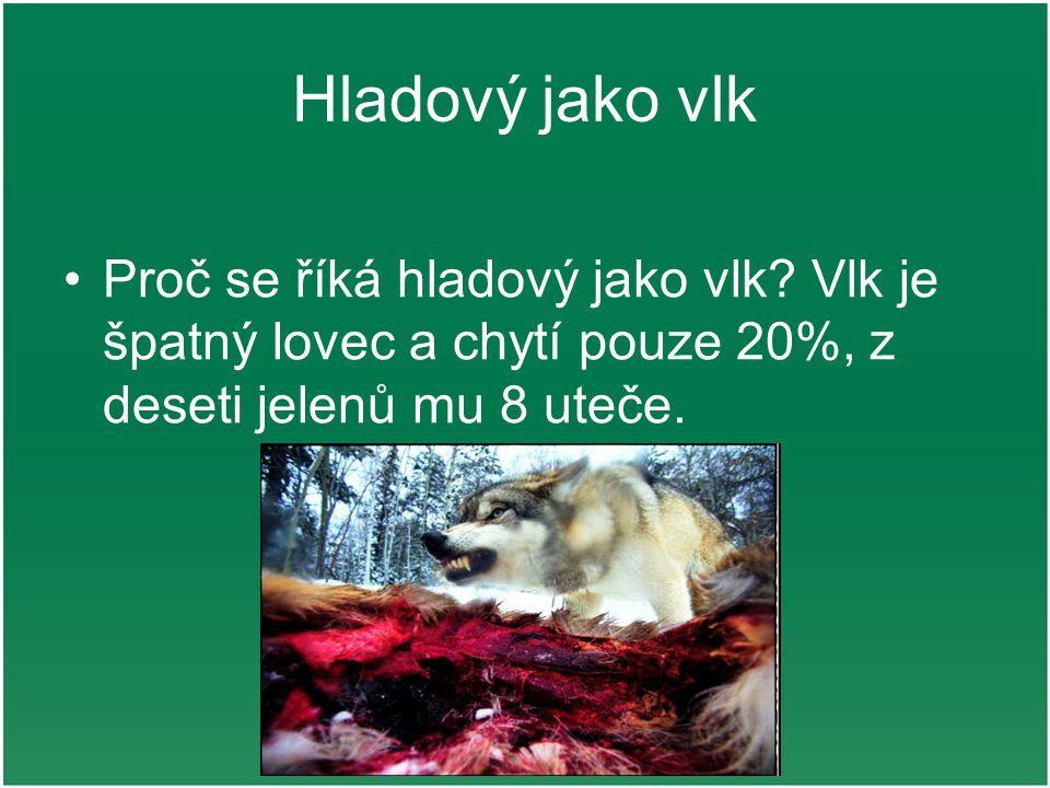 Hladový jako vlk Proč se říká hladový jako vlk.