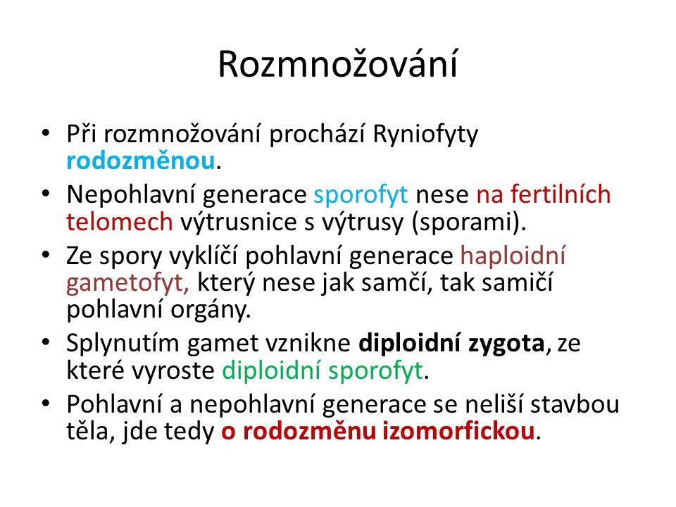 Rozmnožování Při rozmnožování prochází Ryniofyty rodozměnou.