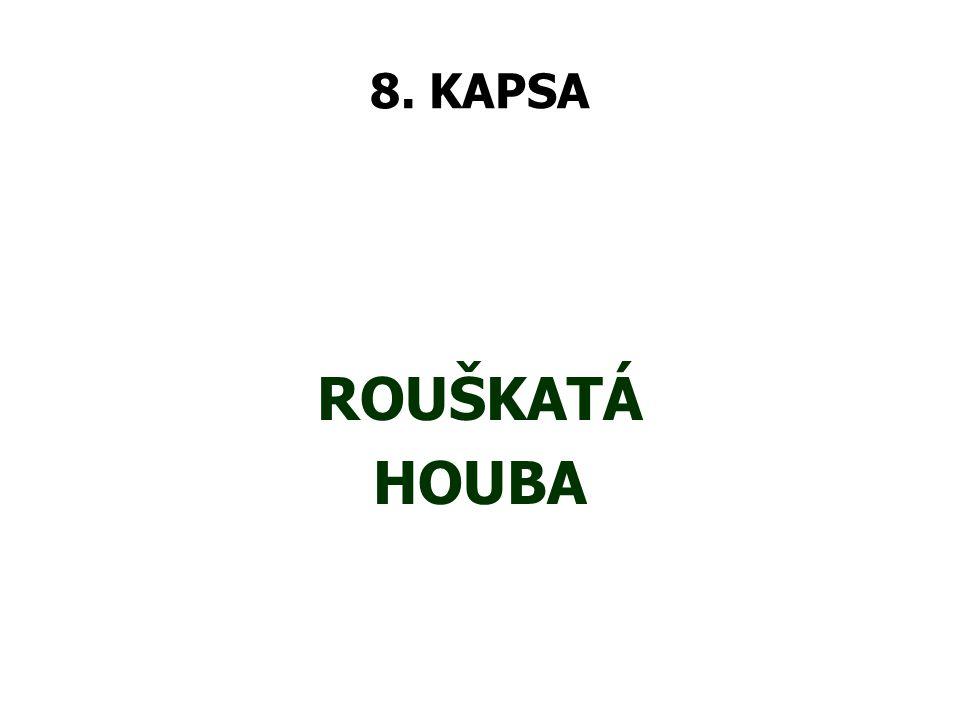8. KAPSA ROUŠKATÁ HOUBA